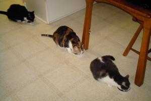 Duncan, Katy and Marlo