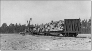 Railroad cars with logs - Saint Marks, Florida, photo by Johnson, State Archives of Florida, Florida Memory