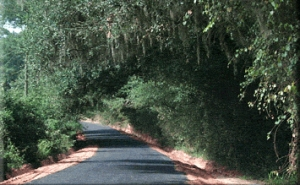 Canopy road en route to the farm - Leon County (FL) Public Works photo